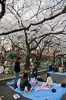 One of Japan's most crowded, noisy and popular cherry blossom spots, Ueno Park features more than 1000 trees along the street leading towards the National Museum and around Shinobazu Pond. Rather than the poetic, quiet, contemplative scene that one might expect, the sake-fueled revelry goes into the night with companies celebrating springtime with karaoke sessions in this type of hanami or cherry blossom viewing party.