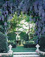 Stunning landscape photo of an arbor covered in blue wysteria blosooms in a formal english garden in southern Florida.
