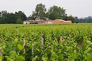 ???? a chateau in the background. Is is La Dominique? Do you know?  Saint Emilion  Bordeaux Gironde Aquitaine France