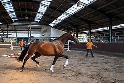 17, Kaidarijke van de Walschot<br /> Stamboek keuring KWPN Turnhout 2020<br /> 17, Kaidarijke van de Walschot<br /> 18/07/2020
