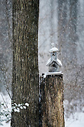 Charming birdhouse chapel in a winter snow storm.