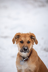 6 month old puppy in snow