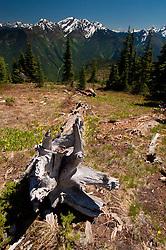 Fallen Tree on Desolation Peak, North Cascades National Park, Washington, US