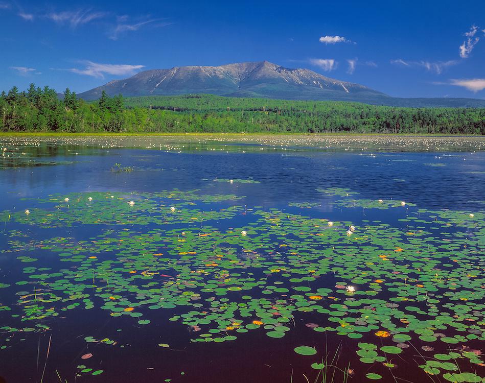 Mt Katahdin overlooks Compass Pond & flowering waterlilies, Piscataquis Co, ME