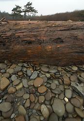 Kalaloch Beach Still Life, Kalaloch, Olympic National Park, Washington, US