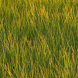 Early evening on the salt marsh in Plum Island Sound Massachusetts USA