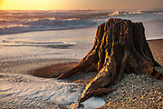 Tree stump embedded in shingle beach, sunset on surf, Haast, South Westland, New Zealand