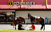 """Shelby Watts with her horse """"Calvin"""" of Wayne and Alexis Muuss with her horse """"Ivy"""" of Bartlett take a break, at the West Chicago McDonald's, at the intersection of North Avenue and Route 59.  The horses enjoyed some apple slices and french fries."""