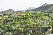 Hebei province north of Beijing. Various areas of land with tree planting obviously to stop possible desertification, Hebei China