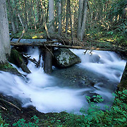 Stream near Helena, Montana