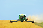 Harvesting peas with combine<br /> Little Bow<br /> Alberta<br /> Canada