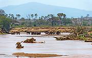 Samburu National Reserve, Kenya, with elephants drinking in the river Ewaso Ng'iro.