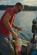 Crab trap catch, Bellingham Bay, WA