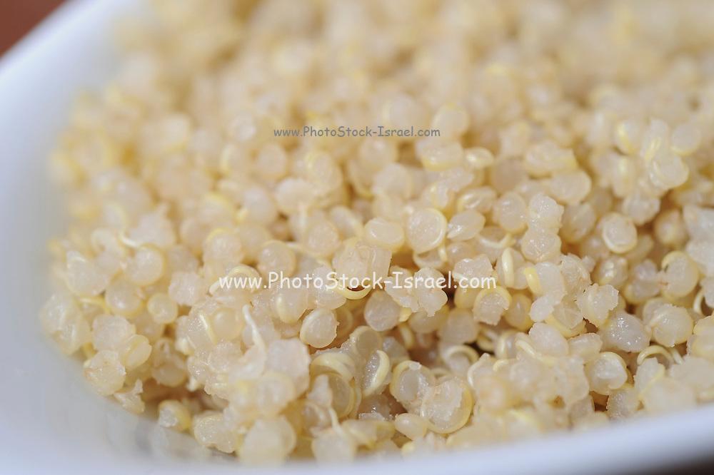 Organic Health Food - cooked Quinoa Chenopodium quinoa