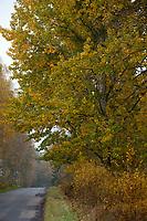 10.2014 zdjecie ilustracyjne N/z jesien w Puszczy Bialowieskiej fot Michal Kosc / AGENCJA WSCHOD