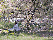 Couple sitting under a cherry blossoming tree for there wedding photo.