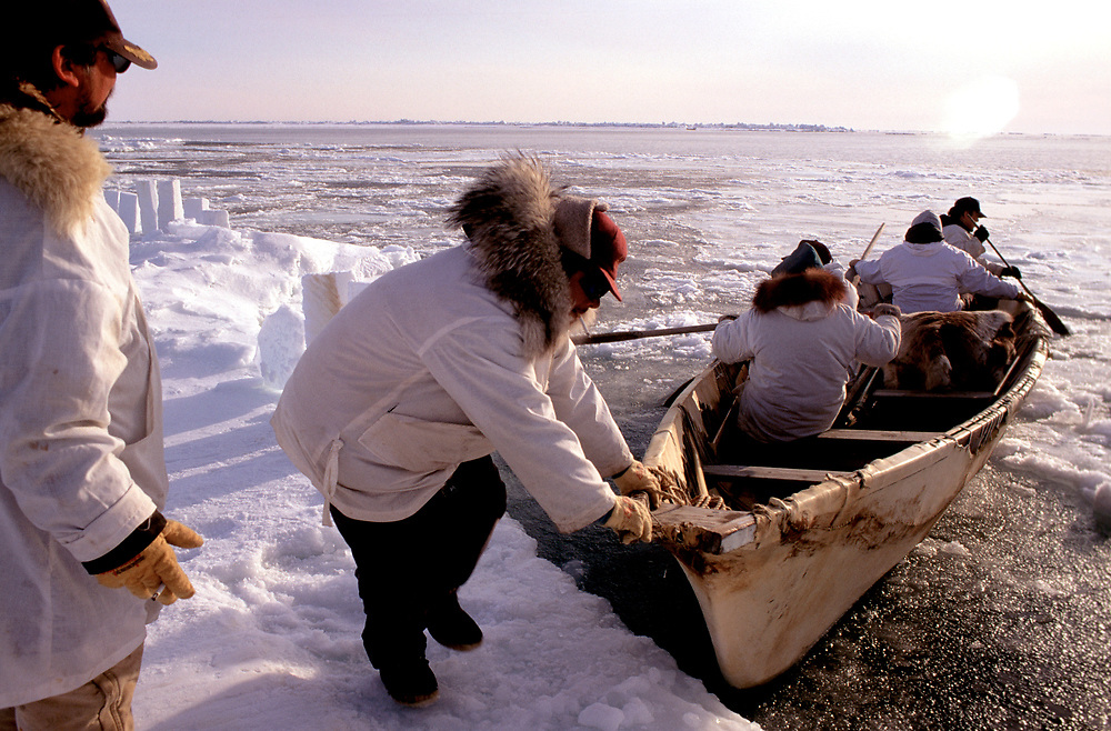 Alaska Native whaling crew setting off in a traditonal umiak to hunt for bowhead whales in the Chukchi Sea, near Barrow