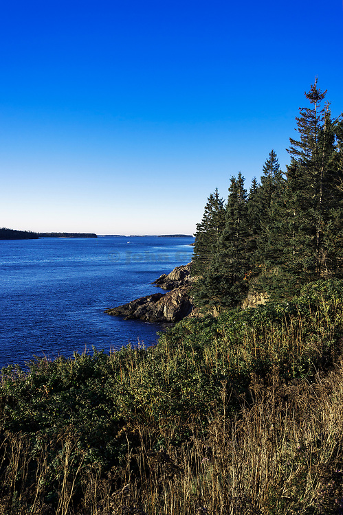 Rugged coastline with trees, Maine, USA.