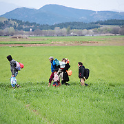 Refugees walk in the fields towards Idomeni, maybe to the transit camp of Idomeni, Greece. <br /> <br /> Thousands of refugees are stranded in Idomeni unable to cross the border. The facilities are stretched to the limit and the conditions are appalling.