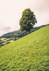 THEMENBILD - ein großer Laubbaum steht ganz alleine auf einer Bergwiese, eine Holzleiter ist an den Stamm gelehnt, aufgenommen am 29. September 2019, Piesendorf, Österreich // a big deciduous tree stands all alone on a mountain meadow, a wooden ladder is leaned against the trunk on 2019/09/29, Piesendorf, Austria. EXPA Pictures © 2019, PhotoCredit: EXPA/ Stefanie Oberhauser