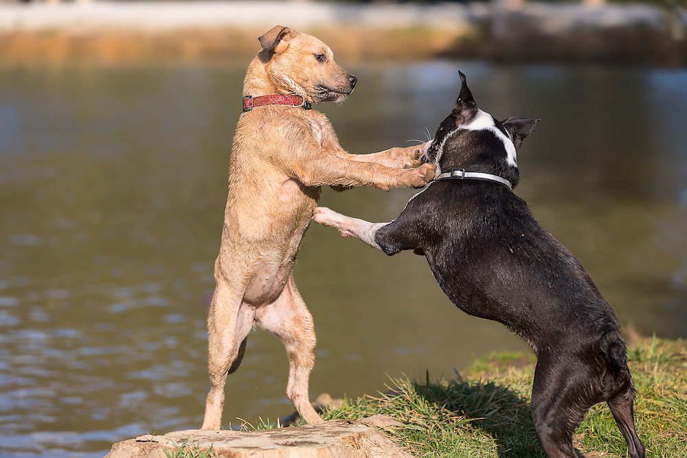 Do you think you're a dog or something? Stand up and fight like a man!