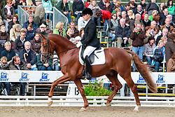 , Warendorf - Bundeschampionate  01. - 05.09.2010, Bailador de Amor - Westendarp, Johannes