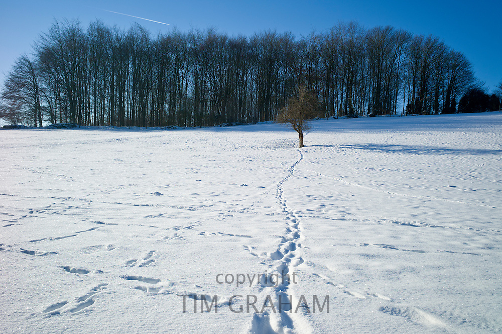 Winter snow scene in The Cotswolds, UK