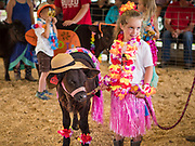 "27 JUNE 2019 - CENTRAL CITY, IOWA: MOLLY DOWNEY, 6, and her calf, Rainbow Dash at the Kiddie Calf Show at the Linn County Fair. Participants dressed the calves up to reflect ""Fairadise,"" the theme of the 2019 Linn County Fair. Summer is county fair season in Iowa. Most of Iowa's 99 counties host their county fairs before the Iowa State Fair, August 8-18 this year. The Linn County Fair runs June 26 - 30. The first county fair in Linn County was in 1855. The fair provides opportunities for 4-H members, FFA members and the youth of Linn County to showcase their accomplishments and talents and provide activities, entertainment and learning opportunities to the diverse citizens of Linn County and guests.           PHOTO BY JACK KURTZ"