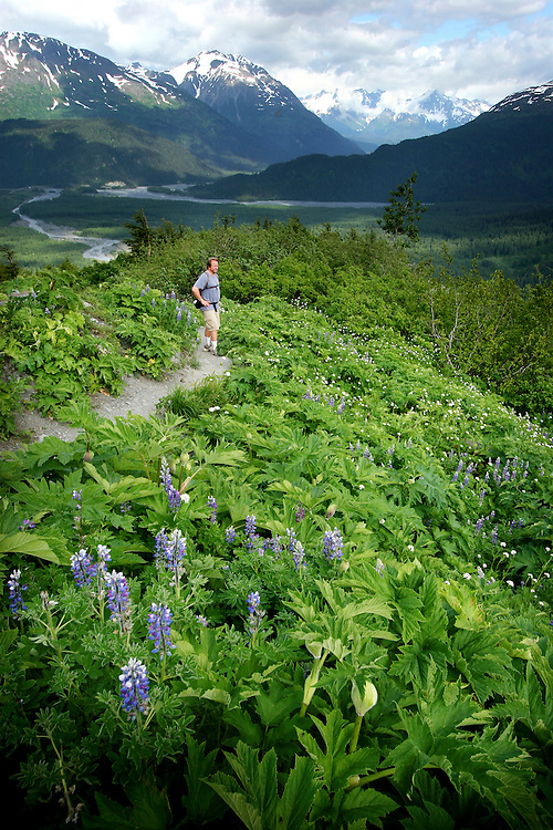 USA, Alaska, Kenai Fjords National Park, Dave Gosse takes a minute to take in a view of the Exit Glacier while hiking the Harding Icefield trail.