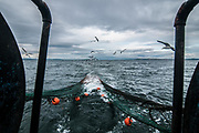 Edinburgh, Scotland. August, 2017. Seagulls follow the trawler to try to catch some fishes while the trawl net is pulled up on August 31, 2017 near Edinburgh, Scotland. Port Seton is one of the few East Lothian harbours to maintain a fishing fleet, but the harbour has seen a sharp drop in fishing in recent years, forcing many to abandon the industry. Father and son, with the same name, Robert Johnson, were forced to sell one of their trawlers due to a decrease in crustacean yields, but they still continue to brave the North sea conditions to bring in their daily catch.  © Simone Padovani