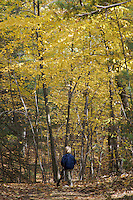 A 4-year-old boy looks at fall colors, near Walden Pond, Concord, MA. MR.