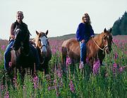 Heather Robbins and Lori Egge riding horses through blooming fireweed, Raspberry Island Lodge, Raspberry Island, Kodiak Archipelago, Alaska.