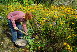 Carol Klein  preparing to plant Fritillaria imperalis bulbs amongst rudbeckia at Glebe Cottage