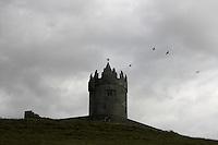 Crows, Corvus corone cornix,  and ruin, Ireland, Burren region western coast