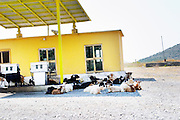 A gas station petrol station in the country side with free roaming goats are getting shelter in the shade from the scorching sun. Near Hani i Hoti close to the Montenegro border. Albania, Balkan, Europe.