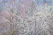 Winter Color, Southern Oregon