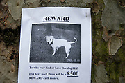 Hackney, London. Poster for lost dog appealing for help in finding him and offering a reward.