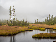 This image of Grey Jay Lake in the Great Bear Rainforest of British Columbia was taken on a grey September day.