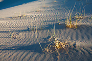 Windblow grass blades inscribe arcs into the sand of Kelso Dunes, in Mojave National Preserve, near the town of Baker, in San Bernardino County, California, USA.