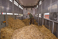 Joep van de Vlasakker preparing the hay in the bison transport vehicle. Transportation of European Bison, or Wisent, from the Avesta Visentpark, in Avesta, Sweden. The animals were then transported to the Armenis area in the Southern Carpathians, Romania. All arranged by Rewilding Europe and WWF Romania, with financial support from The Dutch Postcode Lottery, the  Swedish Postcode Foundation and the Liberty Wildlife Fund.