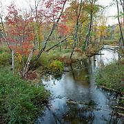 Stevens Brook in Pondicherry Park, Bridgton, Maine