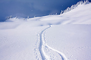 Fresh ski tracks meet and converge in the Mount Baker backcountry along the classic ski tour around Table Mountain in Mount Baker-Snoqualmie National Forest, Washington on January 20, 2008.
