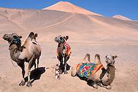 China. Sinkiang Province (Xinjiang). Turfan. Taklamakan desert. // Chine. Province du Sinkiang (Xinjiang). Turfan. Desert du Taklamakan.