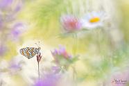 Nature + Macro