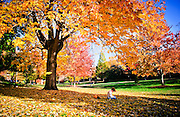 A student enjoys the fall leaves at Foust Park.