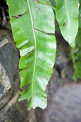Writing On Leaf Of Plant, Royal Palace