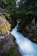 Avalanche Creek, Glacier National Park.
