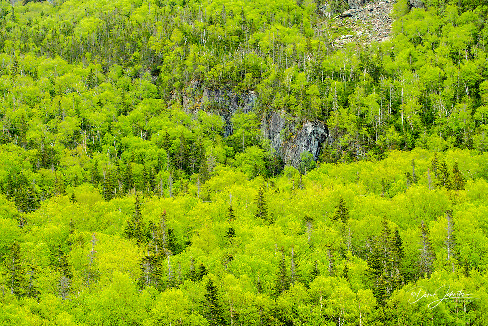 Spring forest, Gros Morne National Park, Newfoundland and Labrador NL, Canada