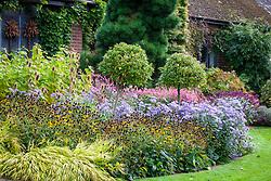 Autumn border in John Massey's garden with asters, rudbeckia seedheads, standard viburnum lollipops, teasels, cornus and salvias.