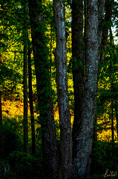 Golden hour light shining on the landscape beyond a stand of trees in the forground.